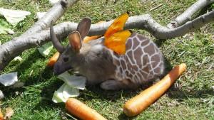 Nature Talent Rabbit