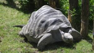 Nature Talent Turtle